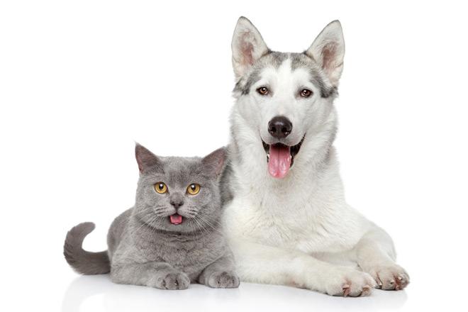 ЛиС - Кошки и собаки в дар